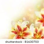 lily flowers border design... | Shutterstock . vector #81630703