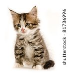 Stock photo kitten isolated on white background 81736996
