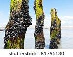 mussel farm in the france sea | Shutterstock . vector #81795130