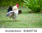 Dancing Chicken In The Farm