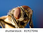 Horse Fly With Black Backgroun...