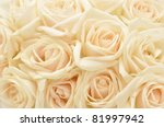 Stock photo beautiful white rose background 81997942