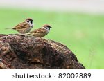 Two Sparrows Stand On The Rock