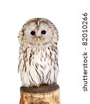 Stock photo grey owl strix aluco 82010266