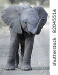 Stock photo baby elephant in road 82045516