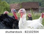 Turkey Organic Farm