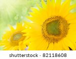 Yellow abstract Sunflower background with bokeh lights - stock photo