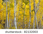 Autumn Foliage At Full Bloom In ...