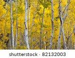 Autumn Foliage At Full Bloom I...