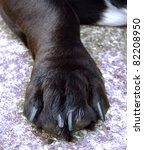 Dogs Foot   Paw