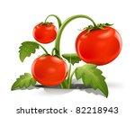 red ripe tomato vector...