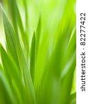 green grass with shallow dof...   Shutterstock . vector #82277422