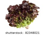 Oak Leaf Lettuce Isolated On...