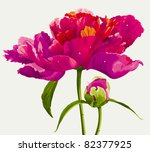luxurious red peony flower and... | Shutterstock .eps vector #82377925