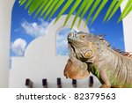 mexican iguana in white house... | Shutterstock . vector #82379563