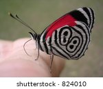 butterfly on the hand | Shutterstock . vector #824010
