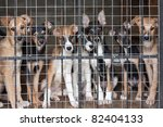 many cute puppies locked in the ... | Shutterstock . vector #82404133