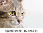 head cat close up on a white... | Shutterstock . vector #82426111