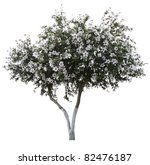 Tree With Blossom Isolated On...