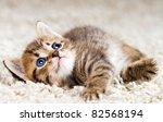 Stock photo funny kitten in carpet 82568194