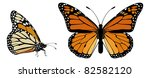 Monarch Butterfly Top And Side...