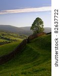 Dry Stone Wall And Lone Tree I...