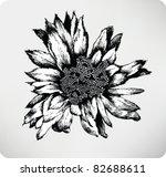 Hand Drawn Flower Cactus Cereus ...