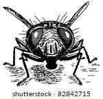 fly | Shutterstock . vector #82842715
