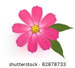beautiful gerber daisy flower...