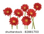 Seven Gerbera Blossom  Isolated