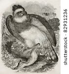 Small photo of Harpy eagle (Harpia harpyja) with prey, old illustration. By unidentified author, published on Magasin Pittoresque, Paris, 1840