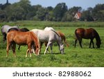 horses grazing on a pasture in Friesland(Holland) - stock photo