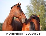 two horses nuzzling each other   Shutterstock . vector #83034835