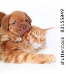Stock photo maine coon cat and puppy bordeaux on a white background 83155849