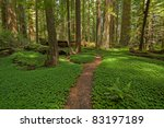 Redwood Forest Location  Avenue ...