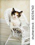 Cat On Wicker Chair