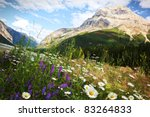Field Of Daisies And Wild...