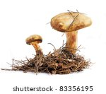 Mushrooms Are Isolated On A...