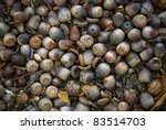 """Acorns"" A natural background photo of acorns on the forest floor. - stock photo"