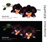 Black Orchid Isolated On A...