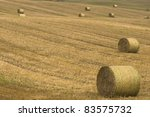 Field after harvest - stock photo