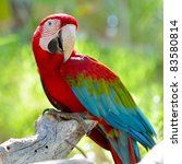 Macaw Sitting On Branch
