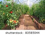 red tomatoes in plastic hothouse | Shutterstock . vector #83585044