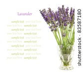 beautiful lavender flowers in a ... | Shutterstock . vector #83587180