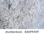 Branches of trees on cold frosty winter day - stock photo