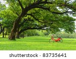 Red Bicycle On Green Grass...