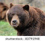 Grizzly bear (Ursus arctos horribilis) - stock photo