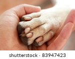 Stock photo friendship between human and dog shaking hand and paw 83947423