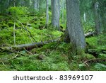 forest on the slopes of the mountains - stock photo