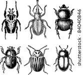 bugs | Shutterstock .eps vector #84040846